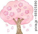 満開の桜の木 66925890