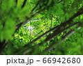 樹木と葉っぱ 66942680
