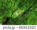樹木と葉っぱ 66942682