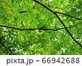 樹木と葉っぱ 66942688