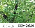 樹木と葉っぱ 66942689