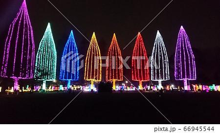 足立区・元渕江公園の光の祭典のメインツリー 66945544