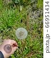 植物 自然 花 66951434