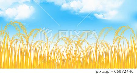 米 稲 農業 背景 66972446