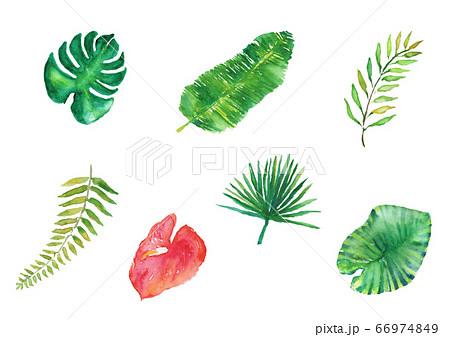 夏 南国 葉 手描き セット 水彩 イラスト 熱帯 ヤシの葉 バナナの葉 66974849