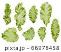 海藻 素材 ウスバアオノリ アオサ  66978458