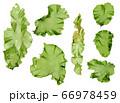 海藻 素材 ウスバアオノリ アオサ  66978459