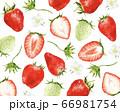 たくさんの苺 水彩風イラスト 66981754