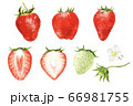 色々な苺や花のセット 水彩風イラスト 66981755