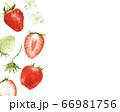 苺 柄 水彩風イラスト 66981756