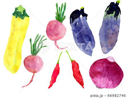 水彩で描かれたナスやズッキーニなどの夏野菜イラストセット 66982746