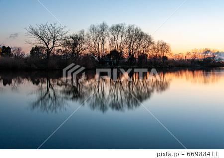 樹木が映り込んでいる朝焼けの淀川 66988411