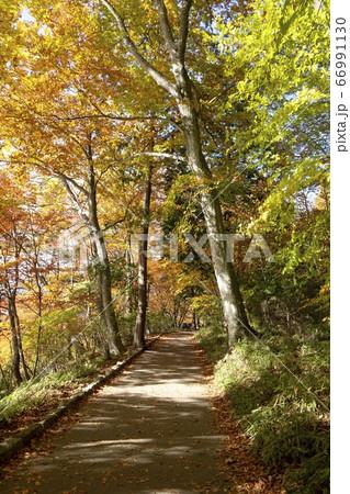 陽射しが当たる紅葉の木々と小路/栃木県日光市 66991130