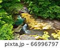 塩原温泉を流れる鹿股川 66996797