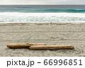 ビーチに流れ着いた流木 66996851