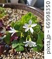 花びら 花 植物 66998350