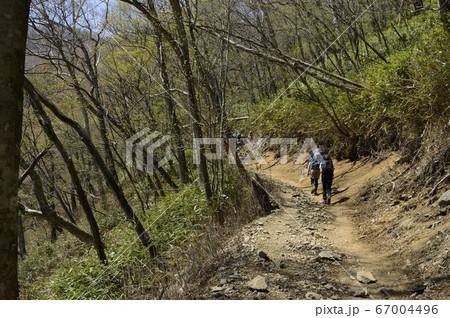雲取山・登山路(大きいザックのハイカー) 67004496
