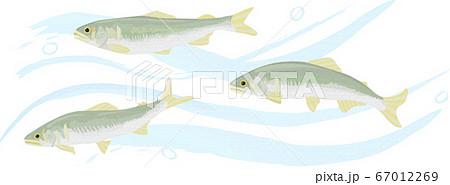 清流を泳ぐ鮎のイラスト 手描き風 67012269