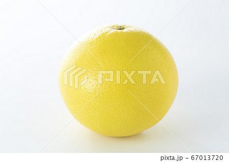 グレープフルーツ 67013720