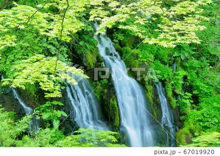 初夏の清里の吐竜の滝の流れと新緑 67019920