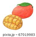 マンゴー 手描き  67019983