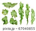 海藻 素材 ウスバアオノリ アオサ  67040855
