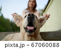 Close-up of woman holding dog by ears on summer day 67060088