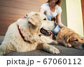 Young woman in blue jeans next to two dogs on street in afternoon 67060112