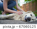 Woman stroking happy dog lying on ground at summer. 67060125