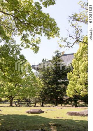 東大寺 講堂跡の礎石と大仏殿(新緑の頃) 67085883