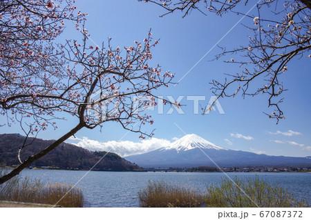 【山梨県】早春の河口湖北岸から望む富士山 67087372