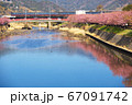 河津桜と列車 67091742