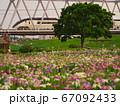 小岩菖蒲園と京成線 67092433