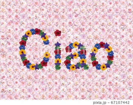 花「こんにちは(イタリア語_A)」(カリフォルニアドリーミング) 67107442