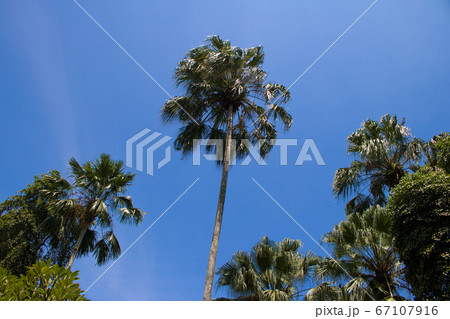 南国イメージ写真(ヤシの木と青空) 67107916