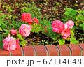 花壇に咲くピンクの花 67114648