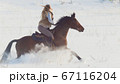 Equestrian sport - rider woman on horse galloping in snowy field 67116204