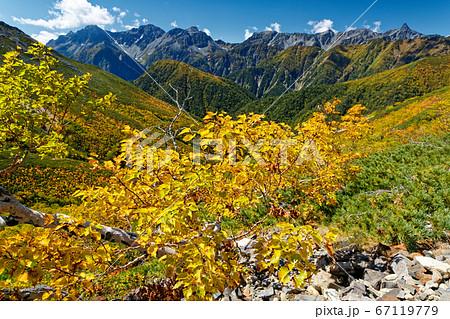 横通岳のダケカンバの黄葉と槍・穂高連峰 67119779