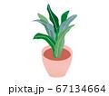観葉植物 67134664