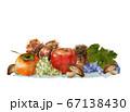 秋の味覚水彩画 67138430
