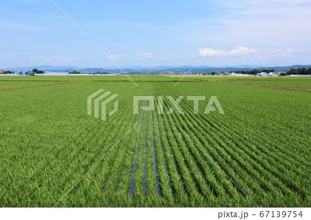 北海道の風景・石狩平野の田園風景 67139754