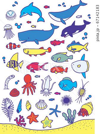 海の生き物 67142183