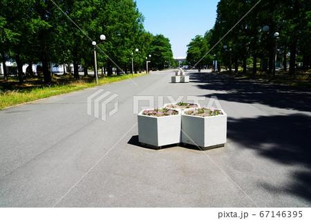 大阪市 花博記念公園鶴見緑地の中央通(夏) 67146395