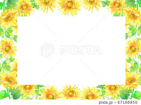 ひまわり フレーム 夏 水彩 イラスト 背景  67166850