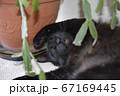 お気に入りの場所で熟睡中。黒猫。猫イメージ素材 67169445