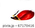 チューリップの花びら、雄しべ、花イメージ素材 67170416