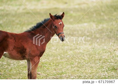 可愛いしぐさの子馬 67170967