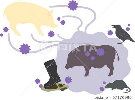 【豚】感染症の感染経路イメージ画像 - A 67170990