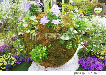 兵庫県 淡路島国営明石海峡公園の奇跡の星の植物館の苔玉 67182039