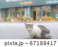 沖縄にいた猫 67188417